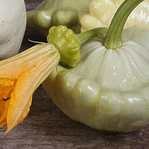 GROSEEDS - Vegetable Seeds, Squash - Custard White, V-SQU-06, 20 Seeds Minimum Per Packet.
