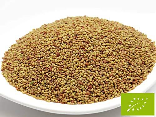 pikantum Bio Alfalfa | 500g | Keimsaat für Sprossen | 99,9{3a8dd75fa50292c10d4933067a18106287a0d1ac199671ee525f894230a6c087} Reinheit | erstklassige Keimfähigkeit