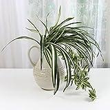OUNONA 2pcs Artificial Chlorophytum Spider Plant Silk Leaves Ivy Vine Bunch Plastic Foliage Bush Home Party Decor