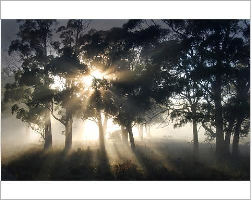 photographic-print-of-blissful-morning-near-paradise-central-tasmania-australia
