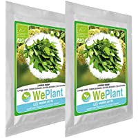 BIO Levistico - Set di semi di piante di erbe - interno/esterno