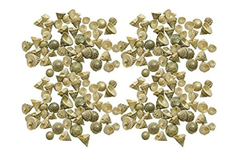 Quality Selected Seashells - Approx 200 pcs shells - Fenestrate Top / Tectus Fenestratus for Seashell Vases, Seashell Boxes, Seashell Frames, Seashell Jewelry Making & Mini Garden Miniture