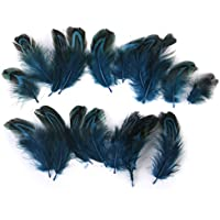 Beito Pheasant Plumas para Craft Mask Hat 3-6 cm 50pcs