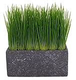 artfleur - künstliches Gras 23cm Kunstpflanze (Grauer Topf) Graspflanze Keramikschale