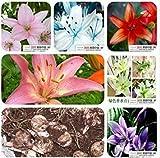 Fash Lady Mezclar: Semillas de Lirio, Semillas de Lirio Perfume, Mezcla de Diferentes variedades Semillas de Flores- 100 Piezas Mix