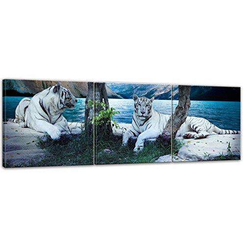 Bilderdepot24 Immagine su telaio a cunei Tigre II - 90 x 30 cm set 3 pezzi - Già montato sul telaio, Stampa artistica intelaiata e pronta da appendere