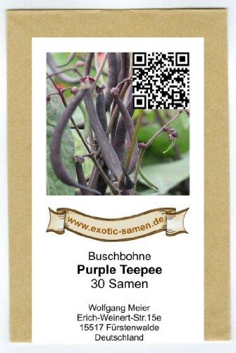 Buschbohne - Kidney-Bohne - Purple Teepee - 30 Samen (Samen Bohne Lila)