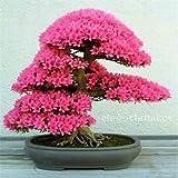 5 Arten der japanischen Sakura-Samen Bonsai-Baum, Bonsai-Samen Blume Kirschblüten, DIY Haus & Garten, freies Verschiffen 15 PC H48 Rose Red