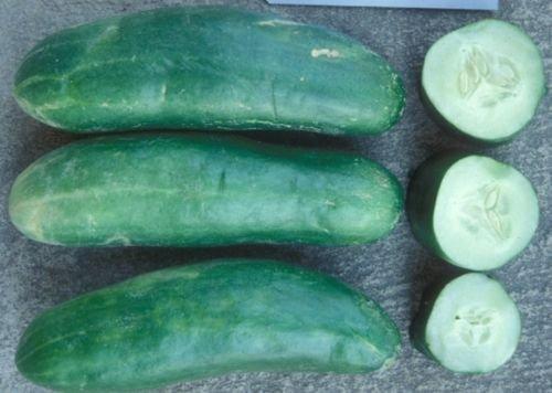 Concombre, SMR 58 - Graines frais emballés à la main NON-OGM (50+ Seeds)