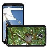 Bild Hart Handy Schwarz Schutz Case Cover Schale Etui // M00135502 Nistkasten Vogelhaus Birds Baum // LG Google Nexus 6
