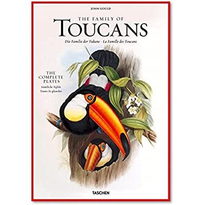 XL-GOULD, TOUCANS