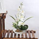 LianLe Orquídeas Artificiales Bonsái de Phalaenopsis Flores con Maceta,blanco