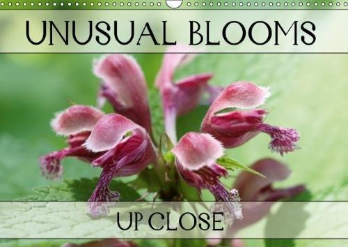 Unusual Blooms Up Close (Wall Calendar 2018 DIN A3 Landscape): A potpourri of peculiar blossoms (Monthly calendar, 14 pages ) (Calvendo Nature) [Kalender] [Apr 01, 2017] Kruse, Gisela