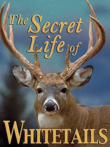 the-secret-life-of-whitetails