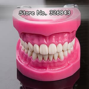 NISSIN Compatible dentaire Étude enseignement dents Modèle avec 32 dents amovibles