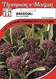 Brokkoli Summer Purple
