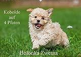 Kobolde auf 4 Pfoten - Bolonka Zwetna (Wandkalender 2018 DIN A2 quer): Lassen Sie sich verzaubern von einer entzückenden Hundefamilie (Monatskalender, ... [Kalender] [Apr 27, 2017] Starick, Sigrid