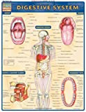 Digestive System: Reference Guide (Quick Study Academic)