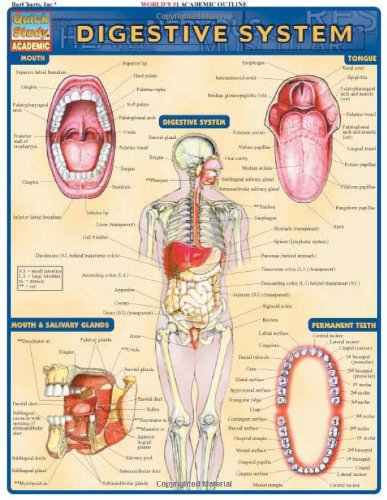 Digestive System: Reference Guide (Quickstudy: Academic)
