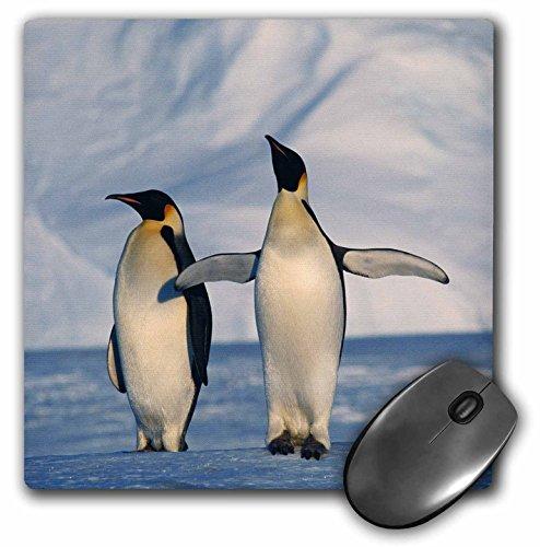 danita-delimont-penguins-antarctica-emperor-penguins-standing-in-winter-mousepad-mp-206332-1
