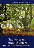 """Baumriesen und Adlerfarn: Der """"Urwald Sababurg"""" im Reinhardswald -"""