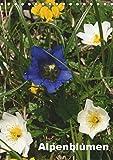 Alpenblumen (Tischkalender 2019 DIN A5 hoch): Dieser Kalender zeigt die bunte Vielfalt der Alpenflora. (Monatskalender, 14 Seiten ) (CALVENDO Natur)