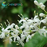Green Seeds Co. 100 Graines Mehrjährige Flieder Baum pflanzen Garten TÃpfe Seltene Blumen pflanzen, Semillas Bonsai Für Tohum Jardin Pflanzen bonsai Einfach Pl: Tiefblau