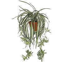 Mica Decorations 918250Fleurs, plante exotique, vert