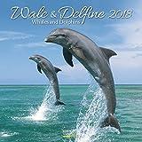 Wale und Delfine 2018