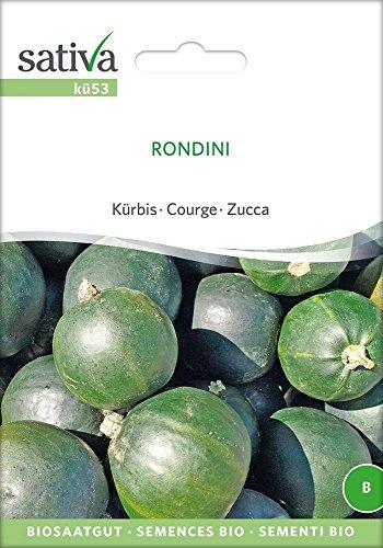 Kürbis Rondini | Bio-Kürbissamen