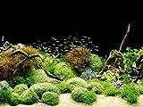 Tetra Deco Art Aquariumposter (Rocks und Plants, beidseitig bedruckt)