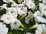Shoopy Star 7: 100pcs / sac à herbe d'eau pour les plantes aquatiques Poissons Plantes réservoir Plantes Pearl nain Aquariu