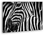 Nahaufnahme von Zebraherde Effekt: Zeichnung Format: 60x40 als Leinwandbild, Motiv fertig gerahmt auf Echtholzrahmen, Hochwertiger Digitaldruck mit Rahmen, Kein Poster oder Plakat