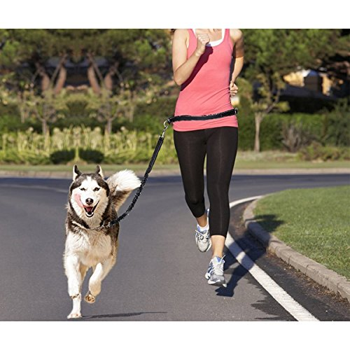 NUOLUX-Hands-Free-Running-Dog-Lead-Adjustable-Waist-Belt-Perfect-for-Jogging-Hiking-Walking-Dog-Lead-Leash-Bungee-Harness-for-Running