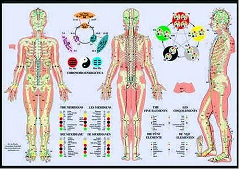 Poster Anatomie - Les méridiens et les cinq éléments :