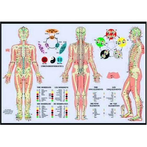 Les méridiens et les cinq éléments : Poster 42x60