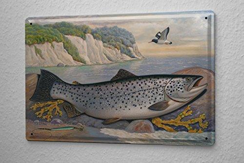 Blechschild Scholz Fischarten Meerforelle Meeresfische Raubfische Friedfische Angeln 20x30 cm
