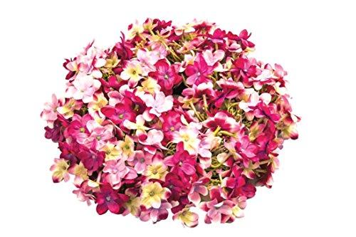 Flora F Blumenkranz Türkranz Kranz Hortensie pink rosa Ø 27 cm Blumen Blütenkranz zum hängen toller Hingucker für das ganze Jahr •Dekokranz