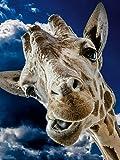 CALVENDO Puzzle Giraffe 1000 Teile Lege-Größe 48 x 64 cm Foto-Puzzle Bild von Elisabeth Stanzer