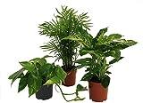 Pflanzenservice 891153 Tropic-Trio