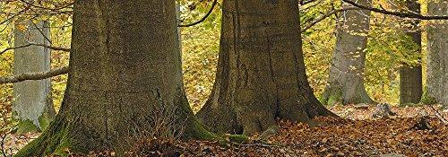 Lentikular marque-page avec image en hologramme 'arbres/animée' enregistré dans les quatre saisons '