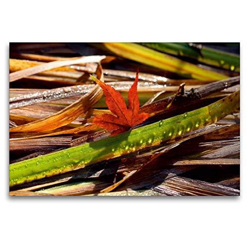 Calvendo Premium Textil-Leinwand 120 cm x 80 cm quer Ahornblatt mit Tropfen-Gras | Wandbild, Bild auf Keilrahmen, Fertigbild auf echter Leinwand, Leinwanddruck