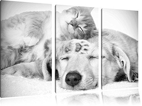 Gattino e cucciolo dorme arte B & W immagine 3 pezzi picture tela 120x80 su tela, XXL enormi immagini completamente Pagina con la barella, stampe d'arte sul murale cornice gänstiger come la pittura o un dipinto ad olio, non un manifesto o un banner,