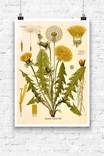 Print Wandbild Poster Bild Pflanze Pusteblume antik Vintage OHNE RAHMEN Format A4