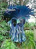 Fash Lady 50 stücke Platycerium Samen Lila Blau Mischfarbe Mehrjährige Schöne Blumensamen Zierpflanzen Für Hausgarten Dekoration 6