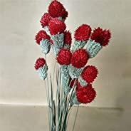 Artificial Flower 10pcs Dry Flower Nature Real Dry Berry Flowers DIY Floral Display Rabbit Grass Plant For Wed