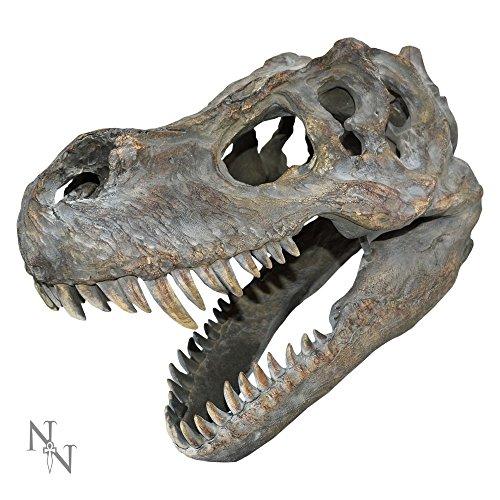 Nemesis Now - Teschio del tirannosauro Rex, 39,5 cm