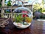 #3: Tied Ribbons planter pot Crystal Glass Hanging with Hanging String