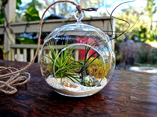 Tied Ribbons Planter Pot Crystal Glass Hanging With Hanging String