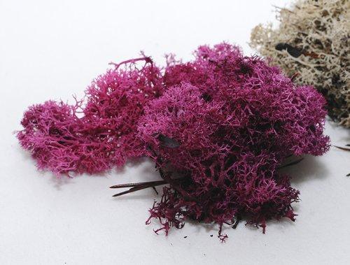 muschio-nordico-stabilizzato-e-colorato-da-400-grammi-fuxia